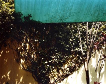 sombra verde I 50x60 I 2008